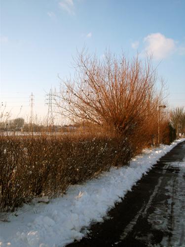 sneeuw 04