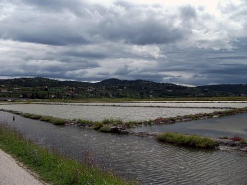 Slovenië 04 - Secoveljske Soline