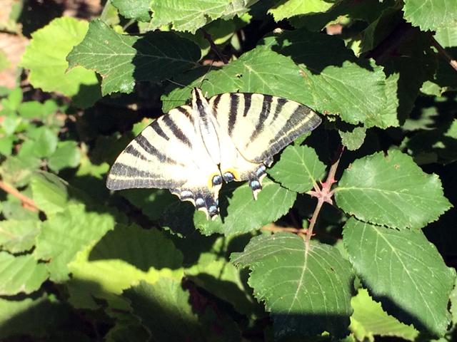 De obligte vlinderfoto op vakantie